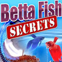 Betta Fish Secrets