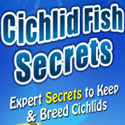 Cichlid Fish Secrets