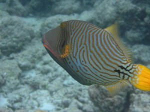 The Common Diseases of Coral Reef Fish