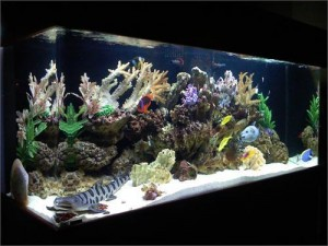 How Are Freshwater Aquarium Fish Classified?
