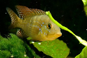 Choosing The Best Filter For Your Freshwater Aquarium